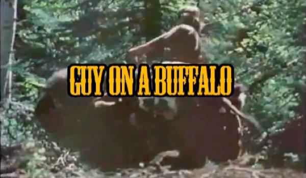 43153972 Guy on a Buffalo