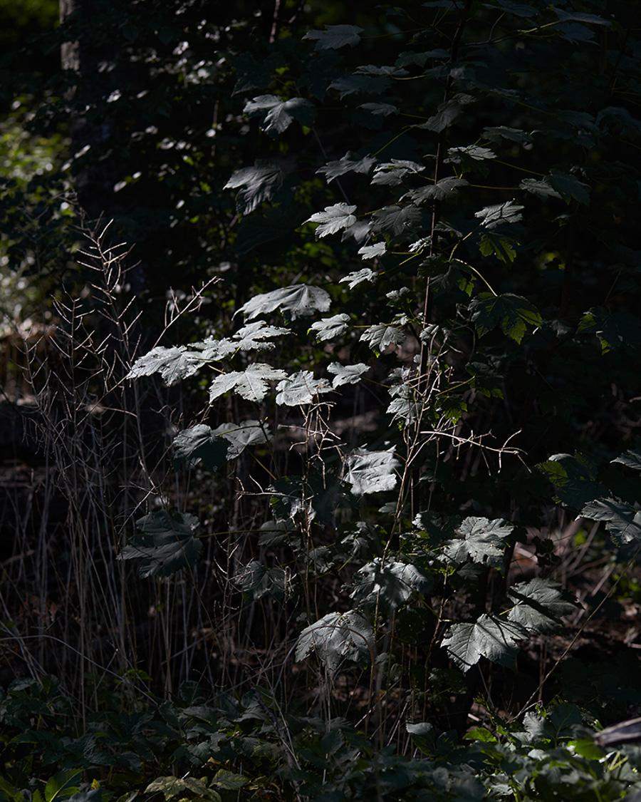 witnessthis_darkroom_amyli-8